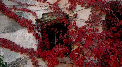 Gazzelli  i colori dell'autunno